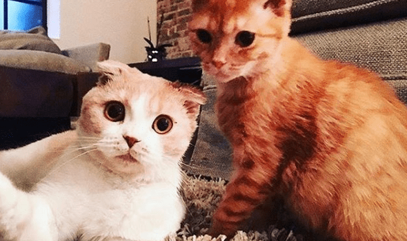 Ed Sheeran's Cats are now Insta-Famous!